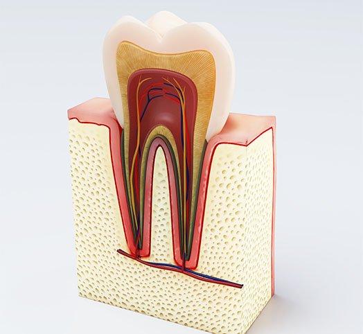root canal treatment procedure melbourne cbd